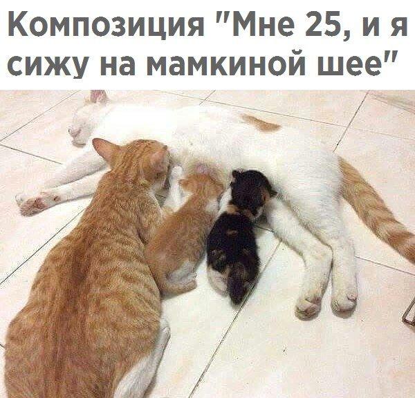 Приколы про сексуальных кошек